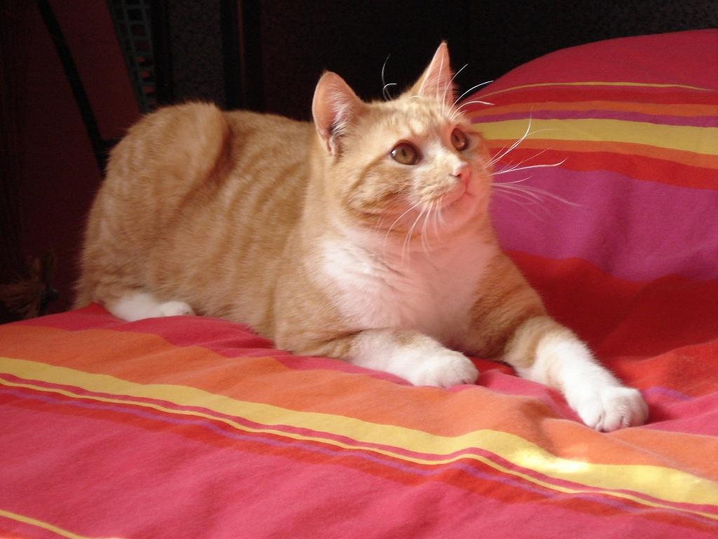 les conseils suivre l 39 arriv e d 39 un chat chez soi. Black Bedroom Furniture Sets. Home Design Ideas